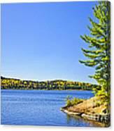 Pine Tree At Lake Shore Canvas Print