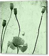 Poppy Art Image Canvas Print