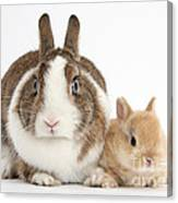 Rabbit And Baby Bunny Canvas Print