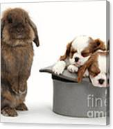 Rabbit And Spaniel Pups Canvas Print