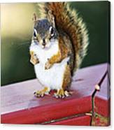 Red Squirrel On Railing Canvas Print