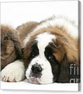 Saint Bernard Puppy With Rabbit Canvas Print