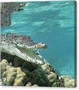 Saltwater Crocodile Crocodylus Porosus Canvas Print
