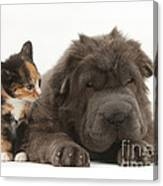 Shar Pei Puppy And Tortoiseshell Kitten Canvas Print