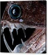 Sloanes Viperfish Canvas Print