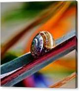 Snail On Stelitzia Reginae Canvas Print
