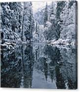 Snow-covered Trees Reflected Canvas Print