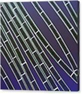 Spirogyra Algae, Light Micrograph Canvas Print
