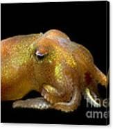 Stubby Squid Canvas Print