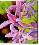 Succulent Blossom Canvas Print