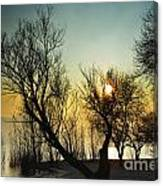 Sunlight Between The Trees Canvas Print