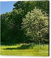 Sunny Meadow Canvas Print