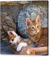 Sweet Cats Canvas Print
