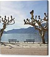 sycamore trees in Ascona - Ticino Canvas Print