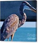 The Great Heron Canvas Print