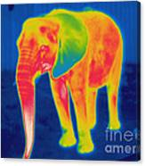 Thermogram Of An Elephant Canvas Print