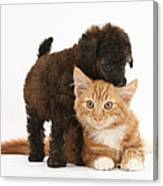 Toy Poodle Puppy With Kitten Canvas Print
