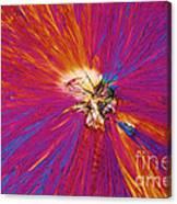 Trinitrotoluene Canvas Print
