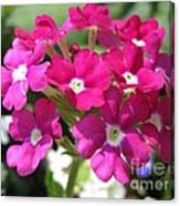 Verbena From The Ideal Florist Mix Canvas Print