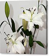 White Lily Spray Canvas Print