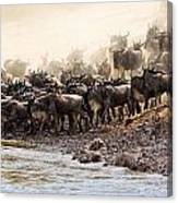 Wildebeest Before The Crossing Canvas Print