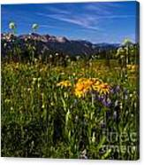 Wildflower Meadows And The Anthracite Range Canvas Print