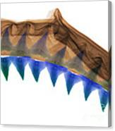 X-ray Of Shark Jaws Canvas Print