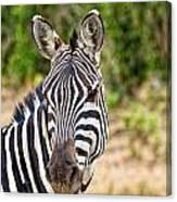 Zebras In The Masai Mara Canvas Print