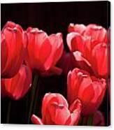 2012 Tulips 02 Canvas Print