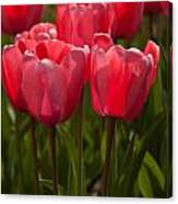 2012 Tulips 08 Canvas Print