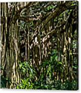 20120915-dsc09877 Canvas Print