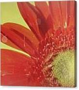 2026a5-003c Canvas Print