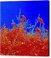 Crows Crows And Crows Canvas Print