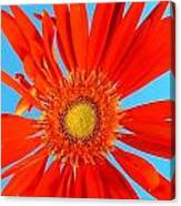 2277c2-007 Canvas Print
