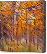 242 Canvas Print