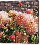 Dahlia Flowers Canvas Print