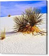 White Sands Canvas Print