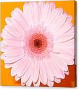 2833-0002 Canvas Print