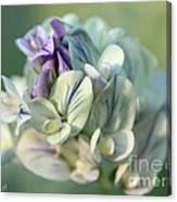 Alfalfa In Shades Of White Canvas Print