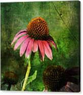 3 Amigos Echinacea Coneflower Grunge Art Canvas Print