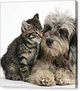 Animal Friends Canvas Print