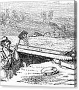 California Gold Rush Canvas Print