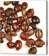 Castor Beans Canvas Print