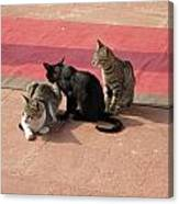 3 Cats Looking Pensive Canvas Print