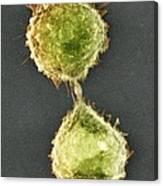 Cell Division, Sem Canvas Print