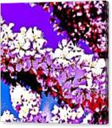 Cherry Blossom Art Canvas Print