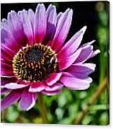 Colorful Flower Canvas Print