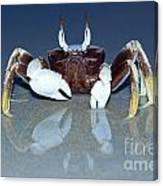 Crab On The Tropical Beach Canvas Print