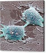 Dividing Cancer Cell, Sem Canvas Print