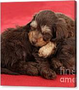 Doxie-doodle Puppies Canvas Print